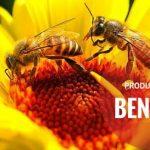 Produsele apicole naturale și beneficiile lor