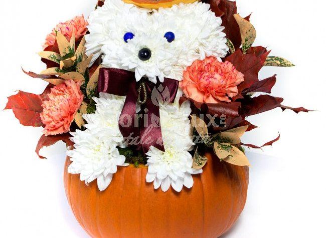 """Flori de Halloween, flori pentru cea mai """"inspaimantatoare"""" noapte din an!"""